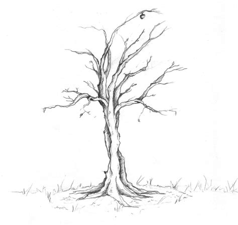 realistic apple tree drawing realistic apple tree black and white sketch coloring page