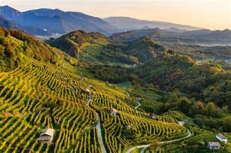 Vino in Villa: degustazioni ed escursioni tra le colline