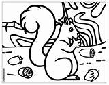 Coloring Nuts Acorns Pages Acorn Nut Template Printable Squirrel Sheet Popular Cartoon Kwala Boowa Getcoloringpages Nest Nose Templates Games Coloringhome sketch template