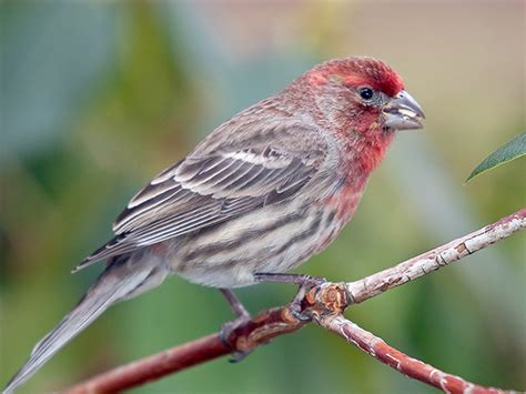 birds of western pennsylvania an album on flickr