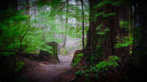 desktop rainforest wallpaper  baden powell trail