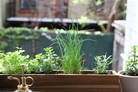 window sill garden diy shade tolerant herbs to grow in your apartment gardenista