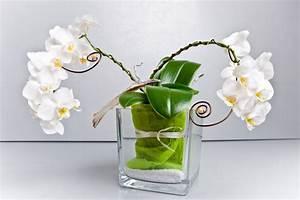 Luftwurzeln Bei Orchideen : orchidee in glasvase kultivieren und richtig pflegen ~ Frokenaadalensverden.com Haus und Dekorationen