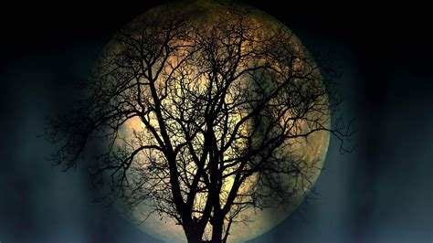 full moon lonely tree   night  resolution dark wallpapers high quality