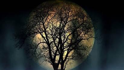 Resolution 4k Dark Moon Wallpapers Tree Night
