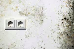 Schwarzer Schimmel Wand : schimmel entfernen schimmelpilz schnell beseitigen so geht s ~ Whattoseeinmadrid.com Haus und Dekorationen