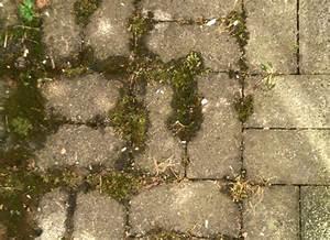 Moos Aus Fugen Entfernen : pflaster reinigung beton und pflastersteine reinigen ~ Lizthompson.info Haus und Dekorationen