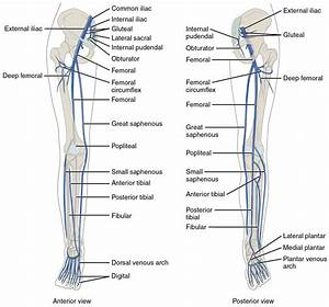 Chronic Venous Insufficiency  U2014 Symptoms And Treatment