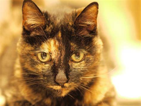 サビ 猫 性格