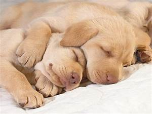 Important Information: Cute Puppies Pictures & Wallpaper ...