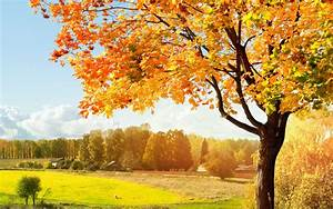 Красивая осень обои для рабочего стола, картинки и фото ...