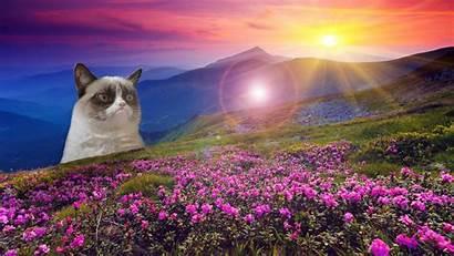 Meme Background Funny Cat Grumpy Backgrounds Dark