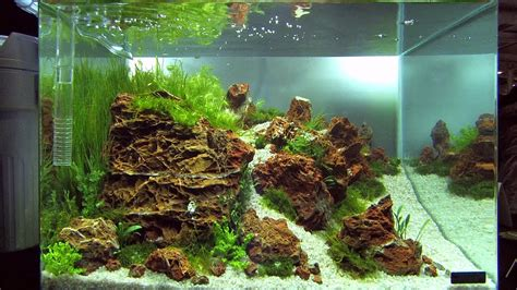 Planted Aquascape by Nano Tanks Of The Aquascaping Contest Quot The Of The