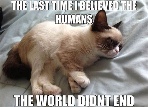 Grumpy Cat Funniest Memes - 26 funny angry cat memes for any occasion freemake