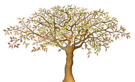 realistic apple tree drawing search results for how to draw a tree realistic