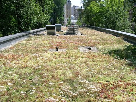 Dachbegruenung Natuerliche Klimaanlage by Bgl Kfw F 246 Rdert Seit Dem 1 Juni 2014 Die Dachbegr 252 Nung