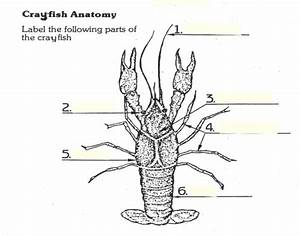 Crayfish Diagram