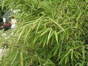 Bambus Im Garten Vernichten : bambus multitalent mit macken mein sch ner garten ~ Michelbontemps.com Haus und Dekorationen
