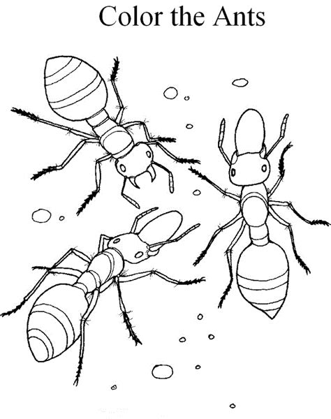 HD wallpapers anthill coloring page