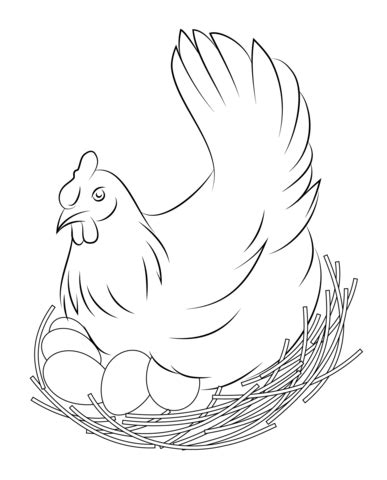 hen sits  eggs coloring page  printable coloring pages