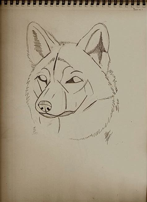 guides  drawing wolves