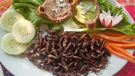 insectes cuisine oseriez vous manger des insectes