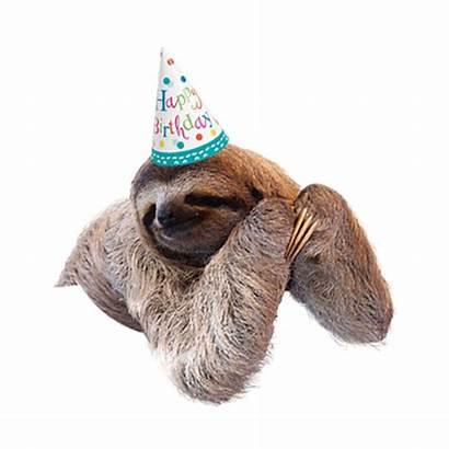 Sloth Birthday Hat Animals Island Jungle