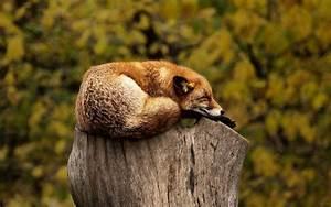 Truc Pour Bien Dormir : quel truc pour dormir bien et facilement infos sommeil ~ Melissatoandfro.com Idées de Décoration