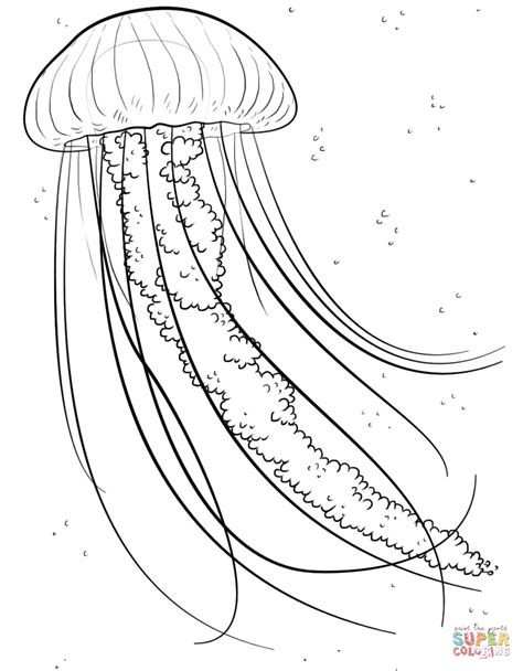 jelly fish coloring page  printable coloring pages