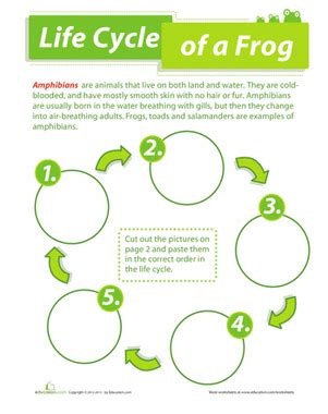more than and less than worksheets for kindergarten cycle of a frog worksheet education