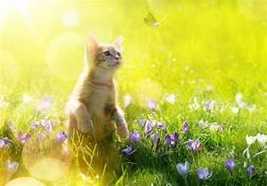 Wie Fange Ich Eine Katze : wie alt wird mein tier ~ Markanthonyermac.com Haus und Dekorationen