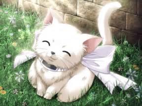 anime cat chibi galeria anime chibi cat