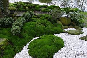 quotmoos moose in japanischen garten als wichtigste bodendeckerquot With whirlpool garten mit moos als zimmerpflanze