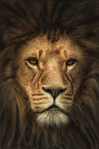 the lion king wallpapers   Tumblr