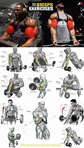 Ultimate Arms Workout Plan For Size In 2020
