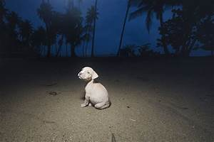 photos tell the sad story of stray dogs dumped at dead dog beach in puerto rico