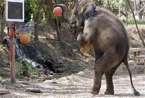 Funny elephant pictures Funny Animal