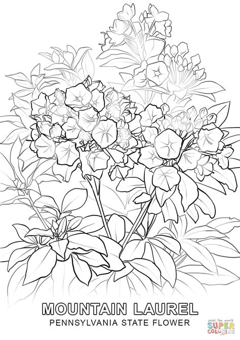 pennsylvania state flower coloring page  printable