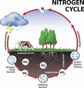 Simplified Diagram Of The Nitrogen Cycle