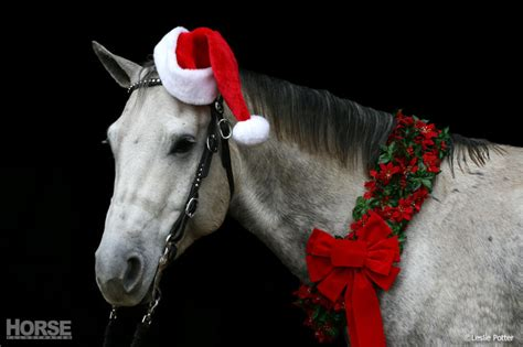 christmas decorating with horses cedarwind performance horses boarding foaling and equine
