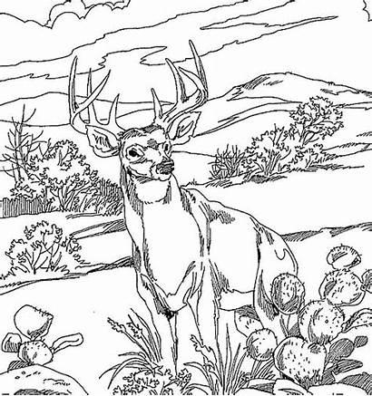 Deer Coloring Realistic Pages Printable Getcolorings