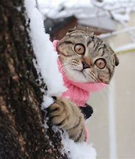 Funny Snow Cat