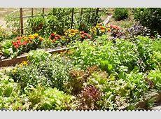 Créer un jardin potager avec jaimejardinercom