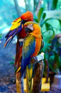 Beautiful Tropical Parrot