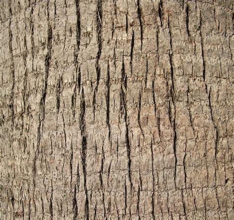 trees texture file a close up shot of a palm tree trunk texture jpg
