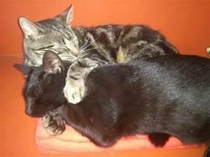 Flöhe Bei Katzen Bekämpfen : parasiten ~ Orissabook.com Haus und Dekorationen