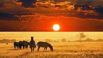 Safari Desktop Wallpapers Backgrounds African Wallpaperaccess Animals