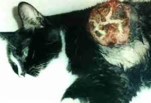 sarcoma in cats sarcoma viruses feline feline sarcoma gardner