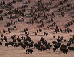 Shortgrass Prairie or Plains Life Zone Mammals