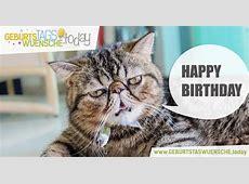 Lustige Geburtstagsgrüße Bild lustige Katze